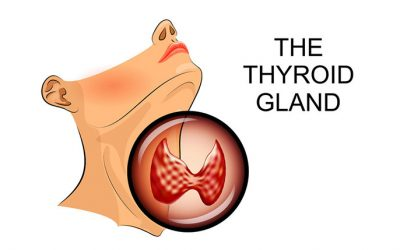 Your Thyroid Gland: Small but Mighty