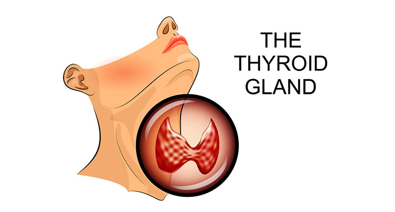Your Thyroid Gland Small But Mighty Dr Jeff Kucine Do